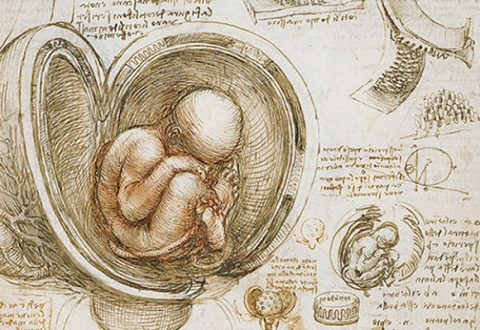 When Does a Human Fetus Become Human?